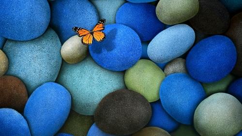 farfalla-solitaria